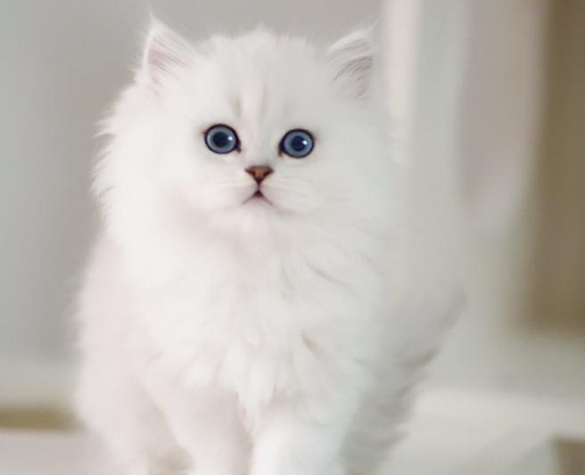 装修完毕,如常营业,高品质幼猫寻有缘家长