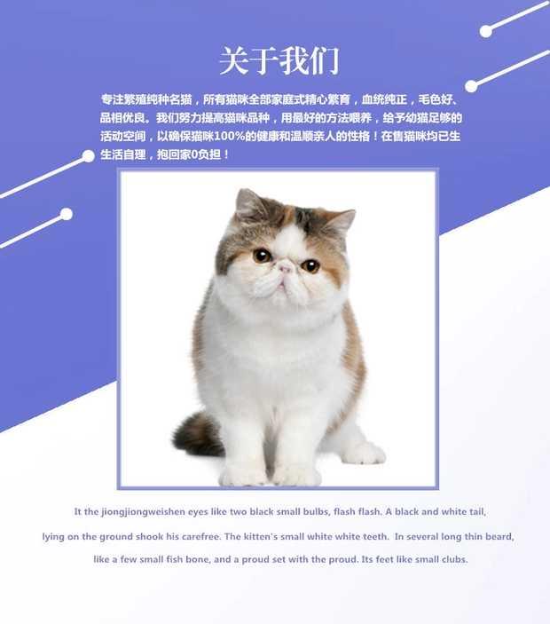 正规CFA猫舍 纯种育苗齐全 出售全品种猫咪活体5