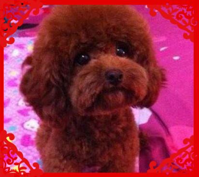 大眼睛脸型甜美各色各体型高品质泰迪熊 品质保证3