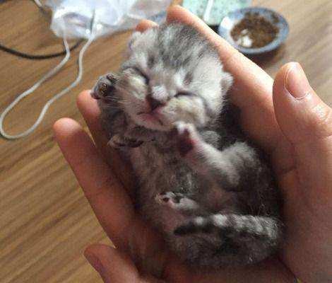 折耳小猫,求抱走.。。