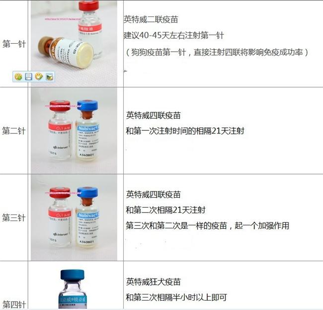 可爱韩系泰迪犬特价出售中 纯家养保证品质和健康7