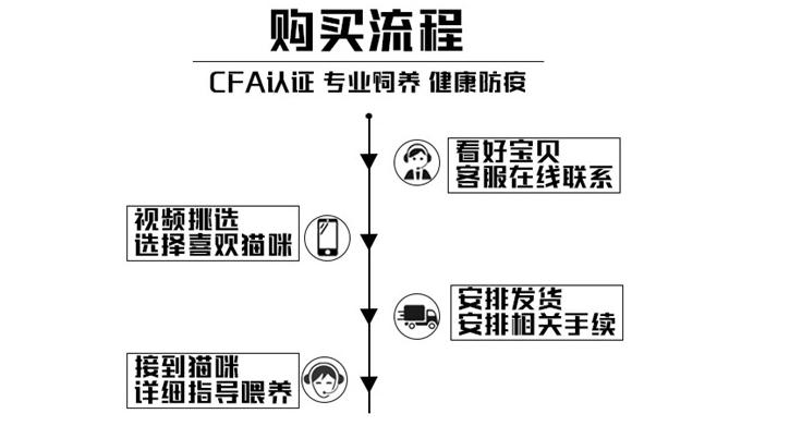 正规CFA猫舍 纯种折耳猫 货到付款包活签协议 送货上门7