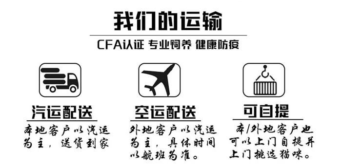 正规CFA猫舍 纯种折耳猫 货到付款包活签协议 送货上门8