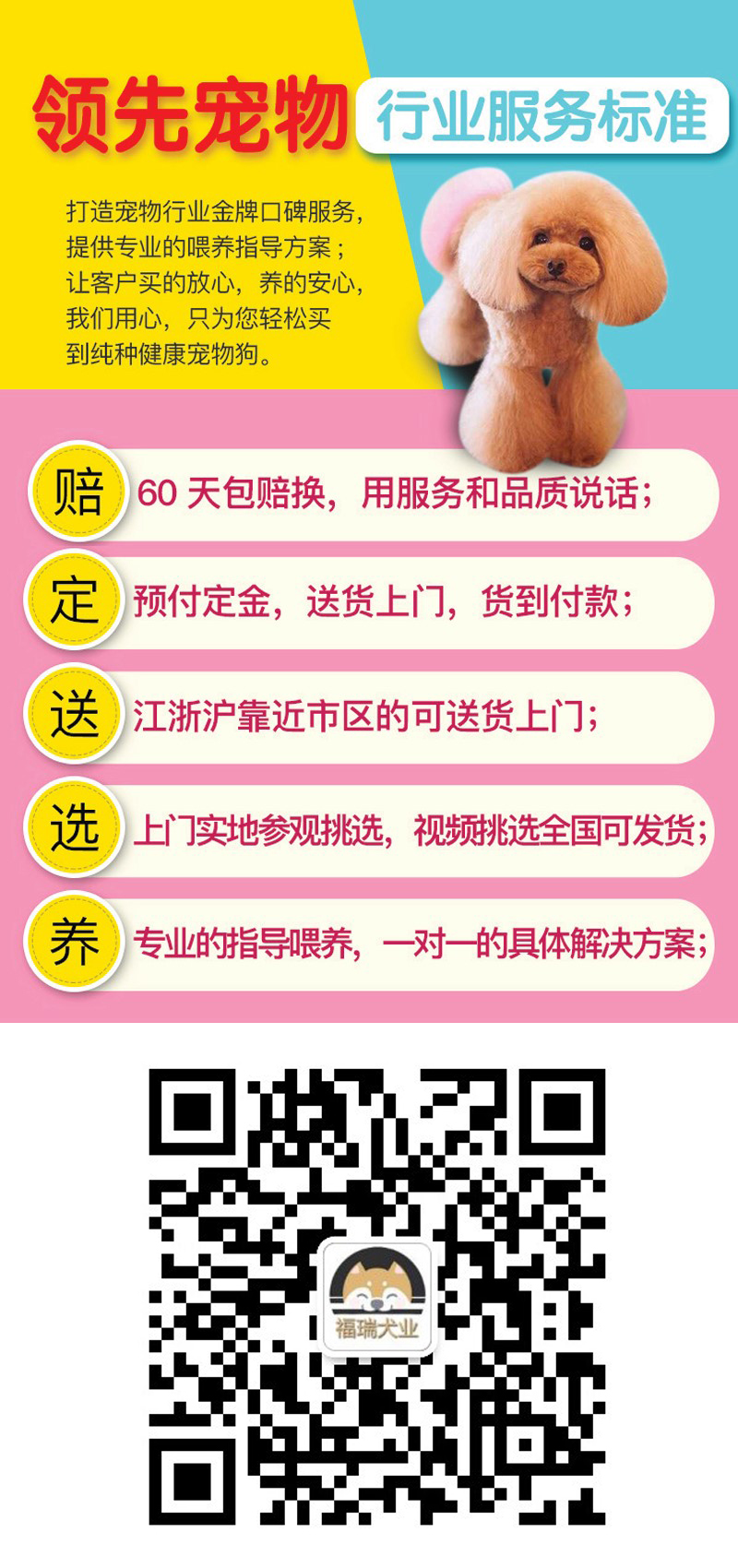 北京犬舍直销银狐幼犬一多窝可选一签协议一可发货8