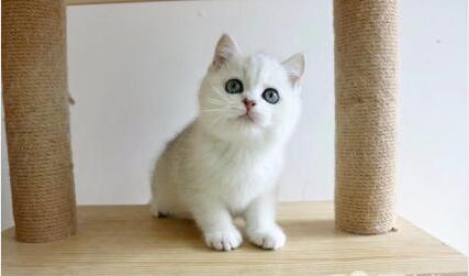 北京无毛猫怎么卖 北京哪有卖无毛猫的 北京无毛猫价格