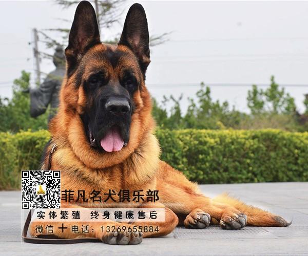 高(gao)品質shi)履寥quan)、可送(song)貨到(dao)家(jia)、售後(hou)簽訂協議、全天(tian)看(kan)狗