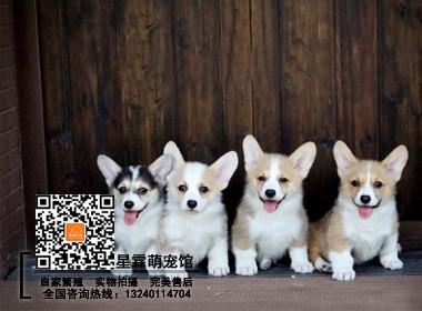 正规犬舍高品质活体幼犬带证书质量三包完美售后
