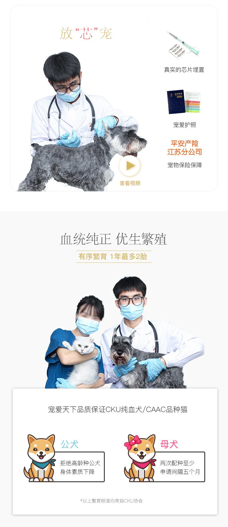 纯种泰迪幼犬活体宠物家养小型迷你泰迪狗贵宾犬活体茶杯犬6