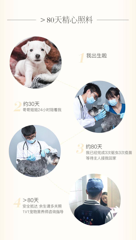纯种泰迪幼犬活体宠物家养小型迷你泰迪狗贵宾犬活体茶杯犬7