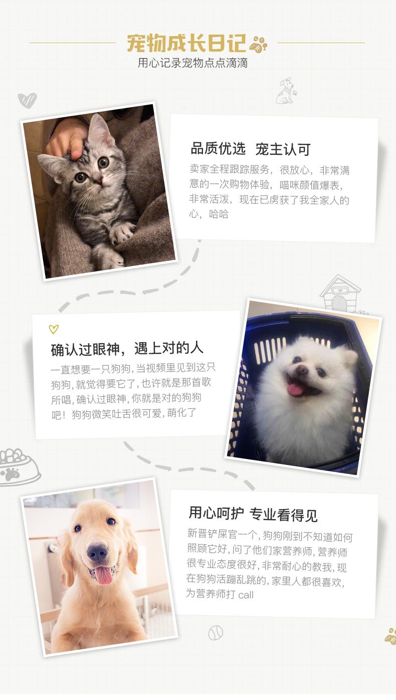 纯种泰迪幼犬活体宠物家养小型迷你泰迪狗贵宾犬活体茶杯犬11