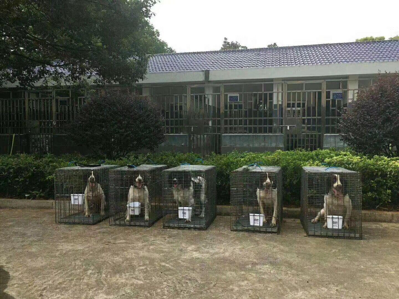 西宁宠物托运省心放心安心找西宁帮宠帮宠物托运6