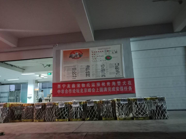 西宁宠物托运省心放心安心找西宁帮宠帮宠物托运3