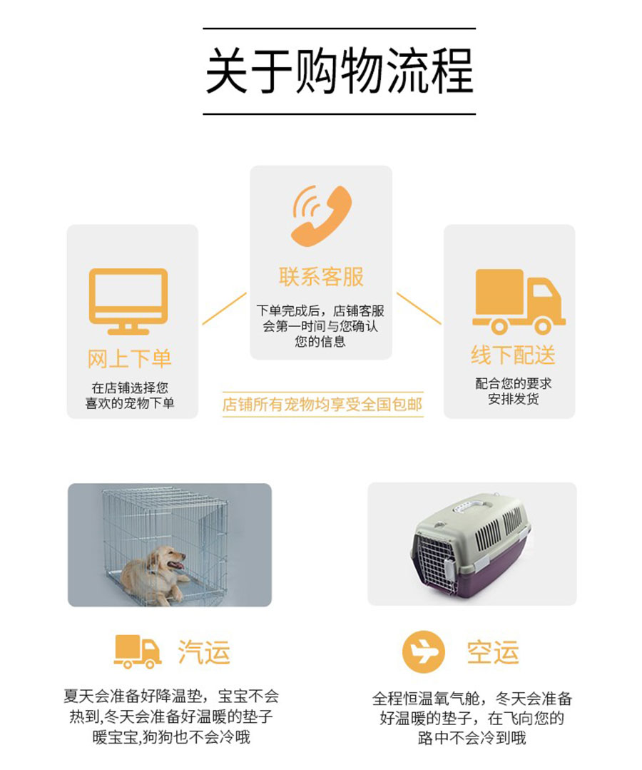 长期出售精品松狮犬幼犬 800一只 支持全国送货上门9