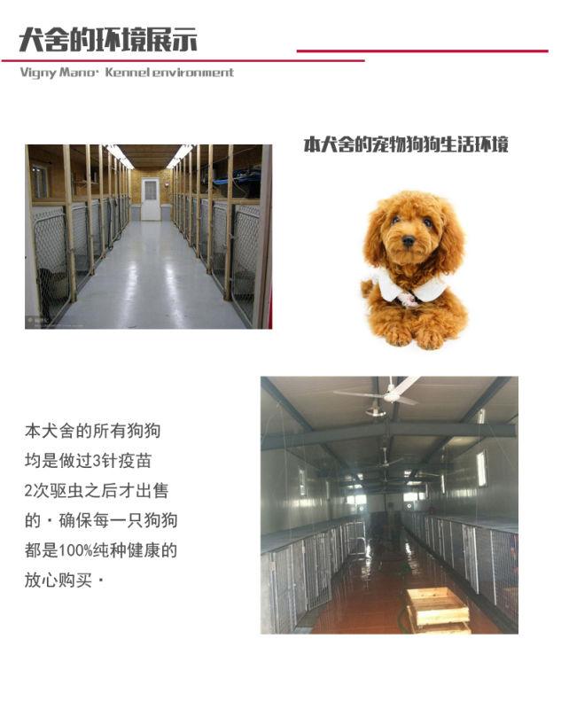 长期繁殖茶杯犬博美比熊 各类纯种名犬 包养活签协议6