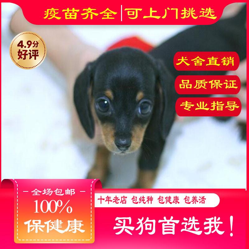 出售精品猎场犬 打完疫苗证书齐全 提供养狗指导