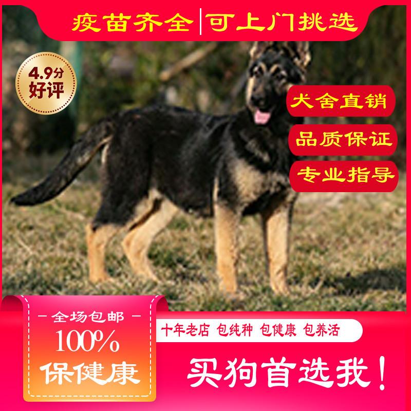 出售精品昆明犬