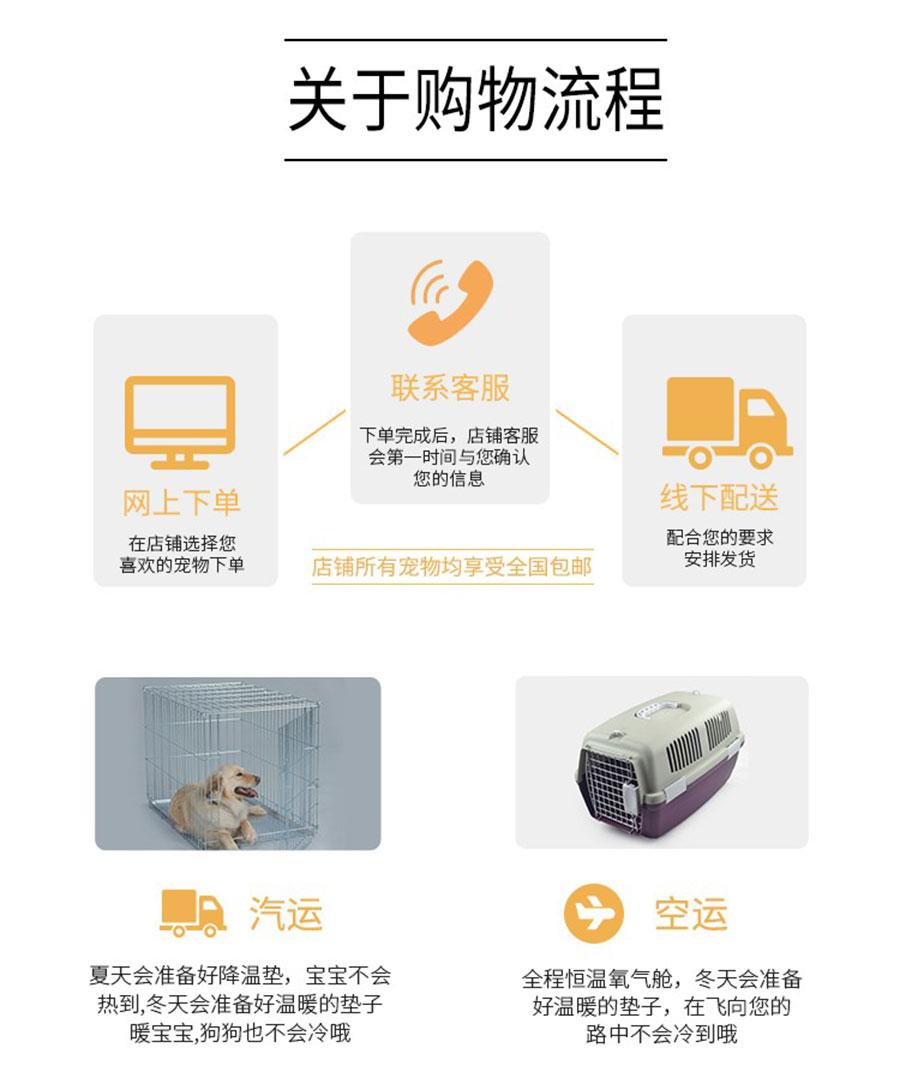 长期出售精品大丹幼犬 2000一只 支持全国送货上门9