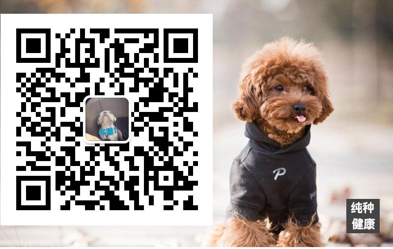 长期繁殖茶杯犬博美比熊 各类纯种名犬 包养活签协议5