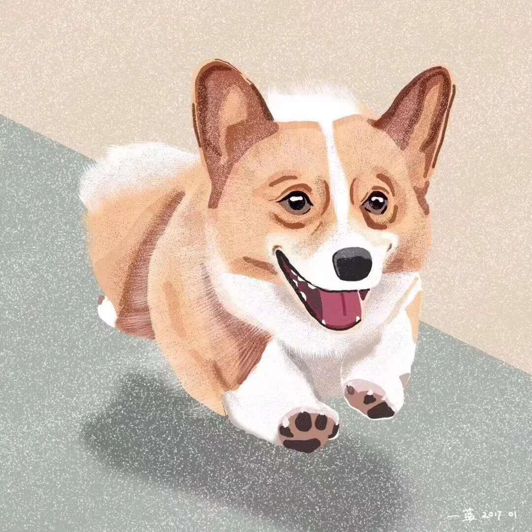 柯基幼犬·三色双色都有·合肥本地店里现货6