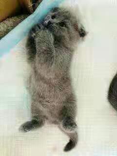 找个人免费领养我家小猫加Q 169074489