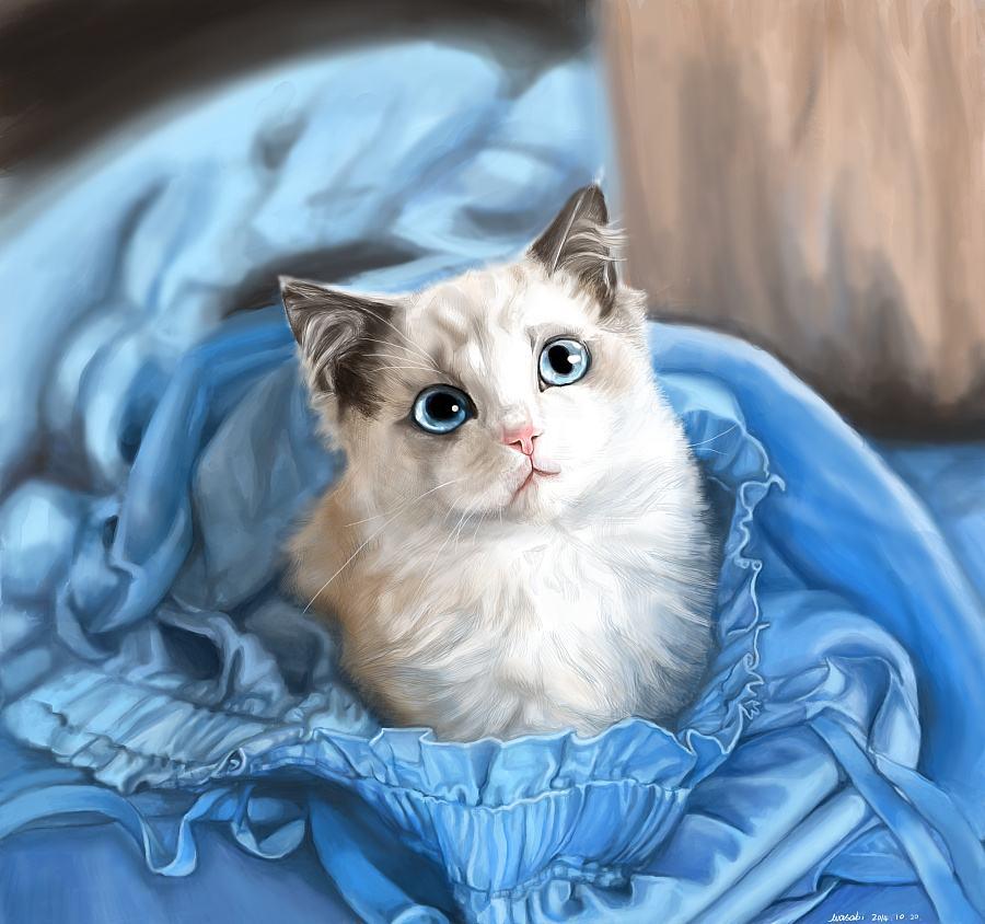官方推荐猫舍 7天无理由退货 正规CFA猫舍 布偶猫