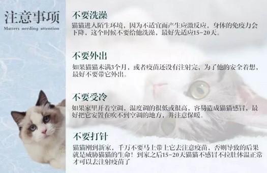 官方推荐猫舍 7天无理由退货 正规CFA猫舍 中华田园猫7