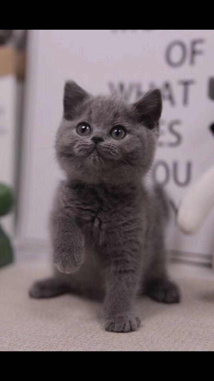 宠物猫_宠物猫的种类、可爱猫咪图片、宠物猫咪价格
