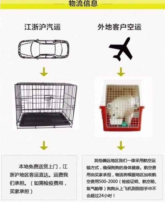 高品质金毛犬幼犬出售 枫叶系巡回金毛犬 买狗可送用品8