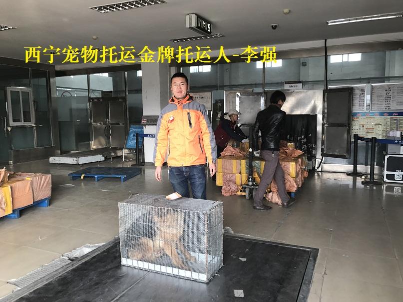 青海首家宠物托运自主品牌西宁帮宠帮宠物托运公司