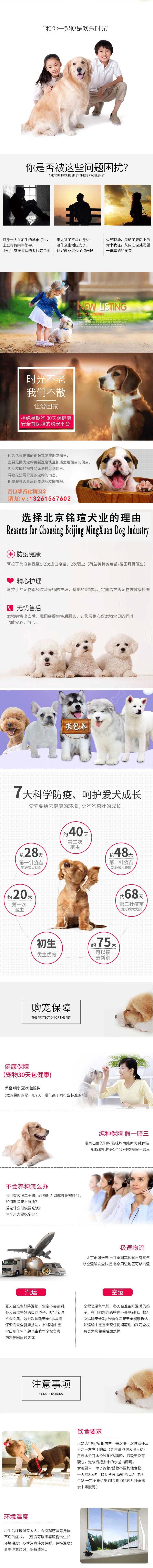 出售纯种纽芬兰幼犬活体家养巨型纽芬兰犬宠物狗狗8
