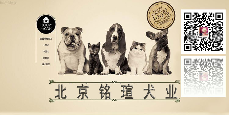 纯种卡斯罗犬幼犬卡斯罗活体卡斯罗幼犬活体猛犬护卫犬卡斯罗5