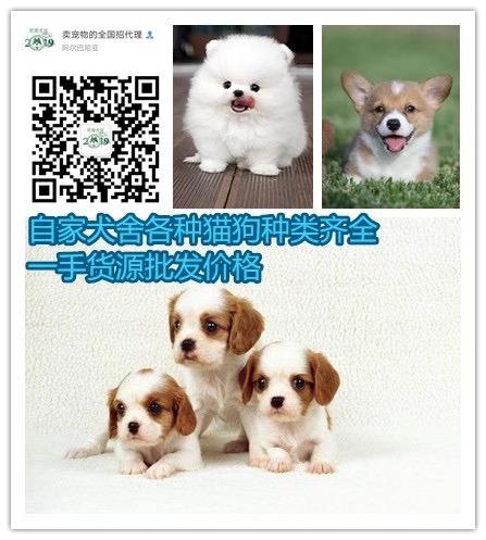 潍坊犬舍繁育基地一手货源自繁自育价格实际比标价低很多5