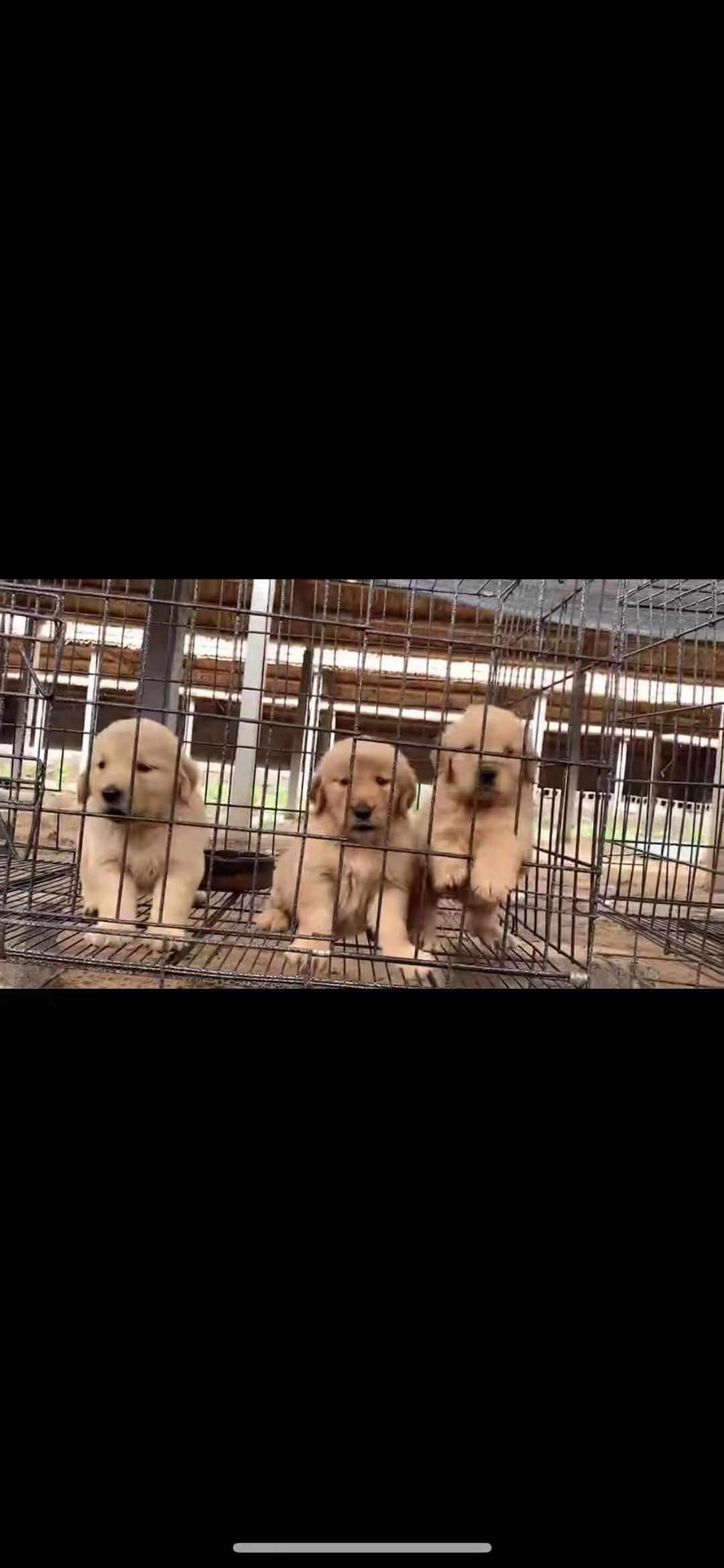 潍坊犬舍繁育基地一手货源自繁自育价格实际比标价低很多2