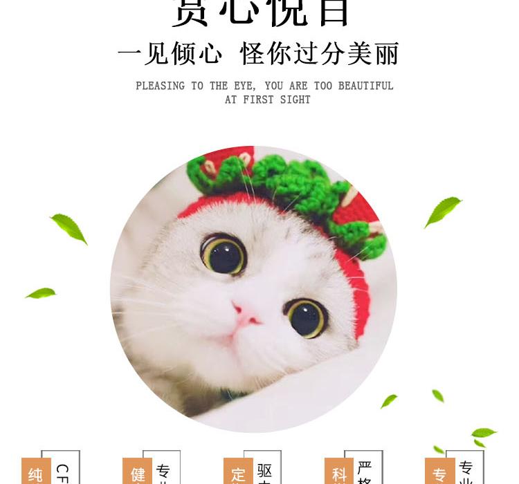 纯种泰国暹罗猫 包纯种包健康 全国发货7