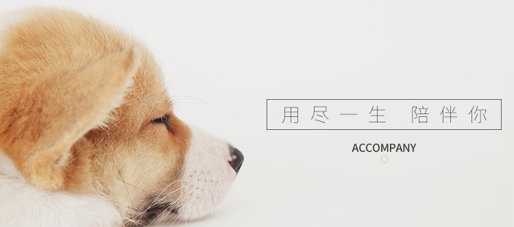 健康纯种京巴犬怎么卖 包养活 签协议 送宠物用品6