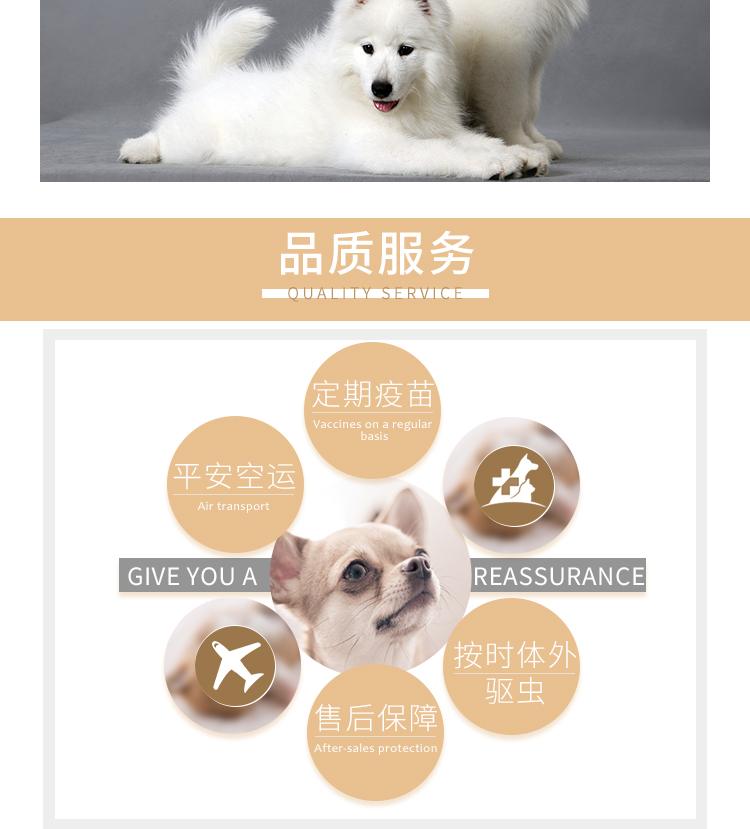 健康纯种京巴犬怎么卖 包养活 签协议 送宠物用品9