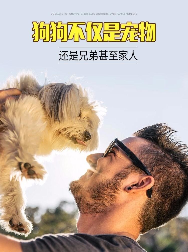健康纯种京巴犬怎么卖 包养活 签协议 送宠物用品11