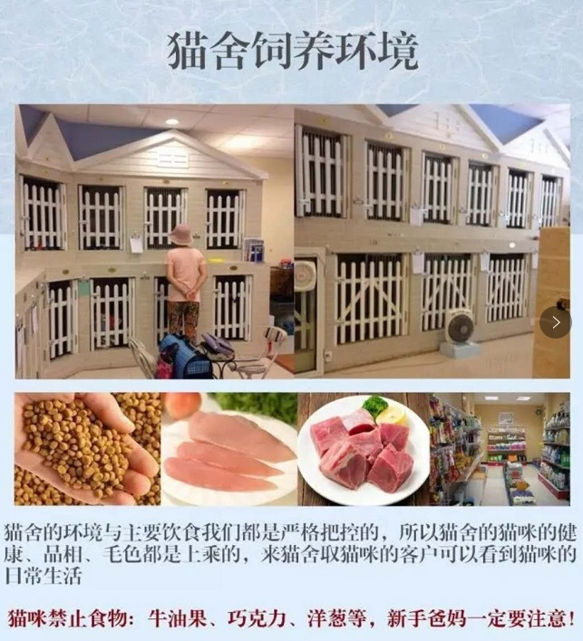 官网推荐已认证 精品加菲猫出售 可签订合同!▊CAF认证▊10