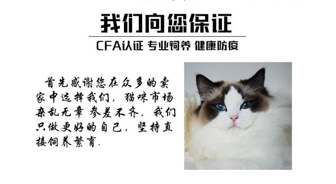 官网推荐已认证 精品加菲猫出售 可签订合同!▊CAF认证▊7