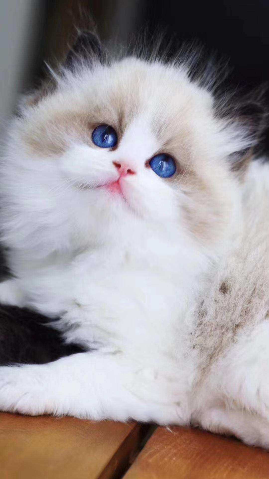 自己养的大猫生了好几只,找不了那么多小可爱