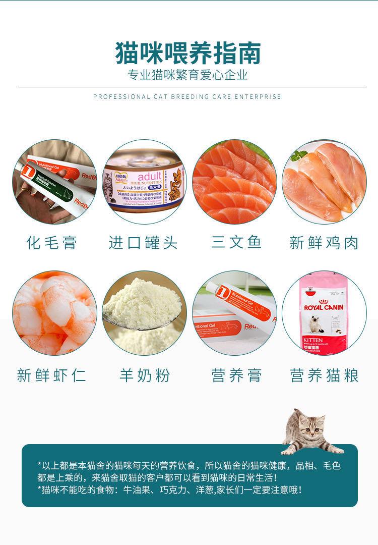 CFA注册猫舍纯种豹猫幼猫活体 可上门挑选9