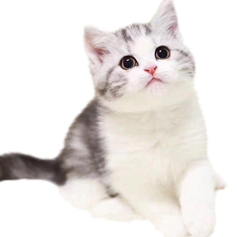 CFA认证猫舍