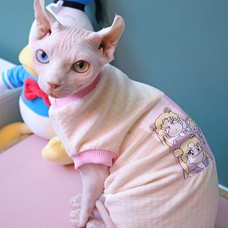 CFA认证注册猫舍斯芬克斯无毛猫