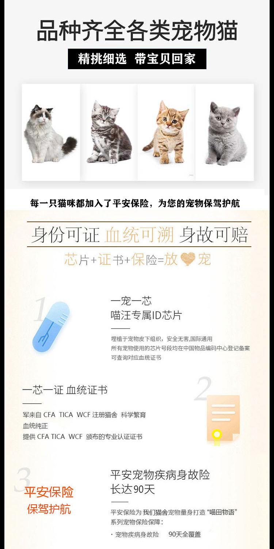 孟加拉豹猫活体纯种金豹银豹雪豹活物玫瑰空心花纹豹猫宠物猫9