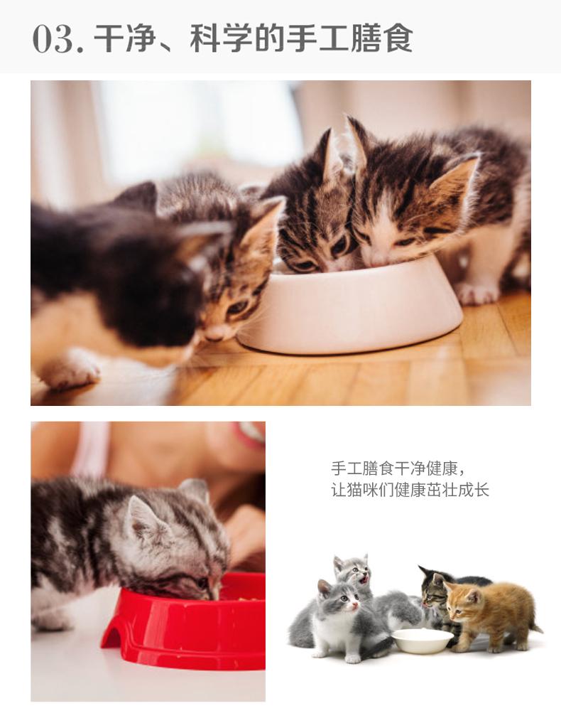 猫舍出售精品纯种孟加拉豹猫 头版优秀体态好花纹清晰17