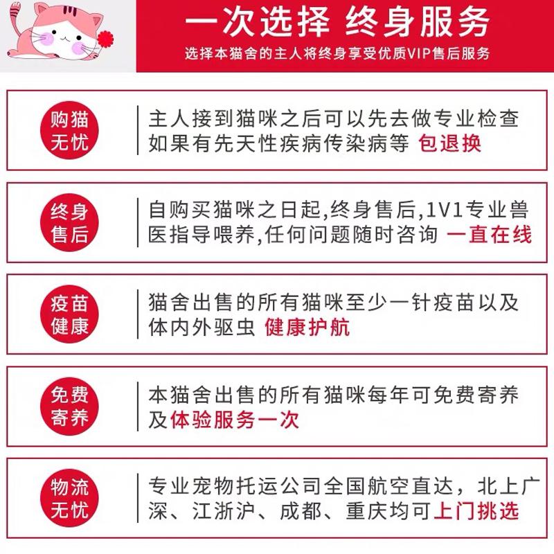 CFA认证资质纯种豹猫 可以上门挑选签订购猫协议8