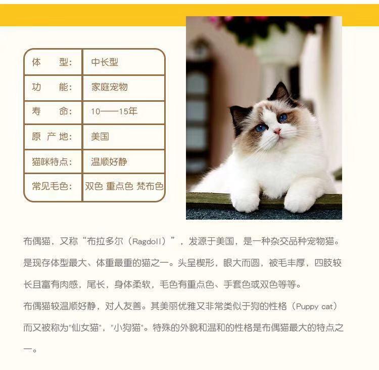 CFA认证资质纯种豹猫 可以上门挑选签订购猫协议7
