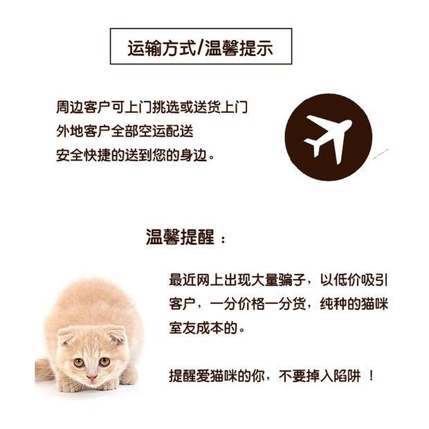 CFA注册猫舍 孟加拉豹猫幼猫空心纹纯种豹猫10