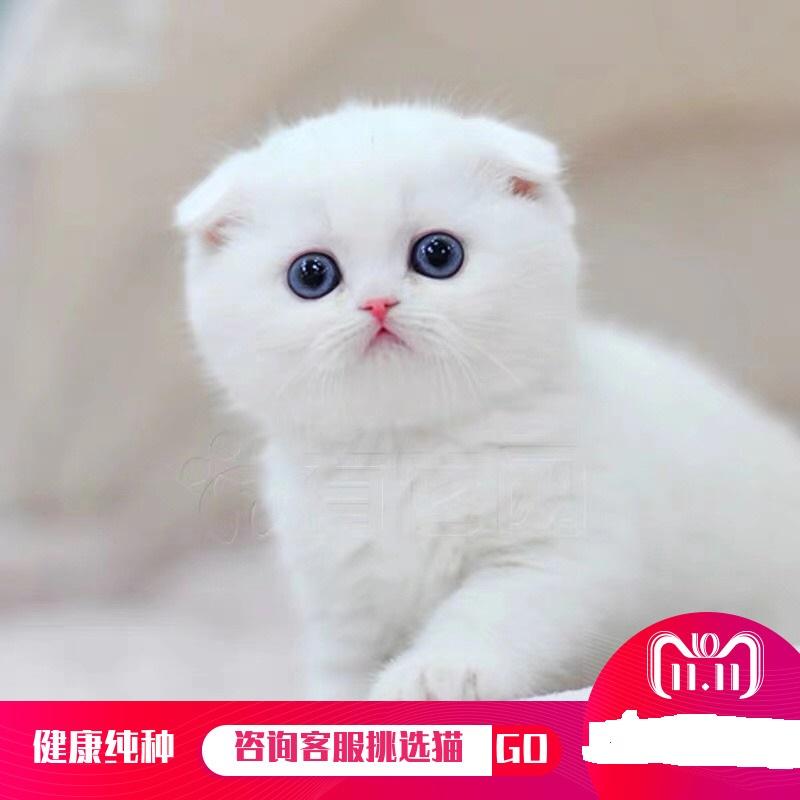 官方推荐猫舍