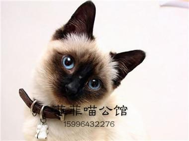 ▊官网推荐已认证▊暹罗猫出售▊CAF认证▊保障第一▊